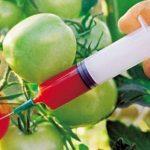 10 ejemplos de alimentos transgenicos