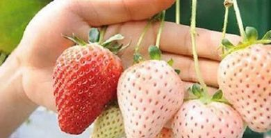 ejemplos de hibridos vegetales