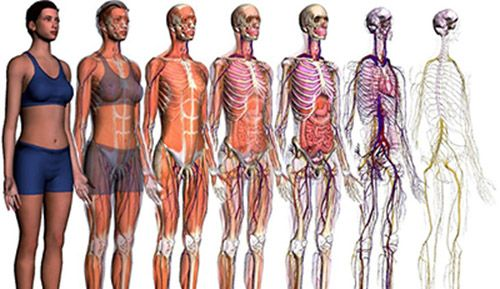 anatomia descriptiva