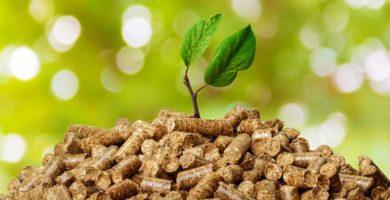 ejemplos de biomasa