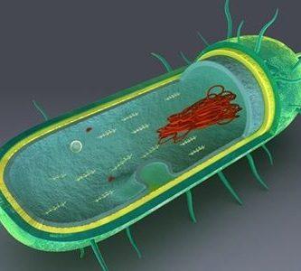 ejemplos de celula procariota