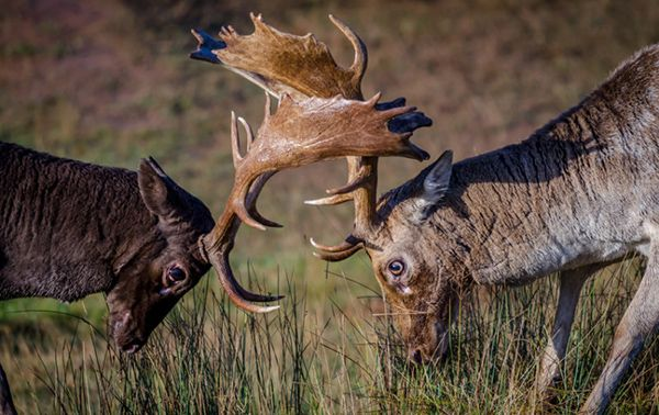 competencia animal