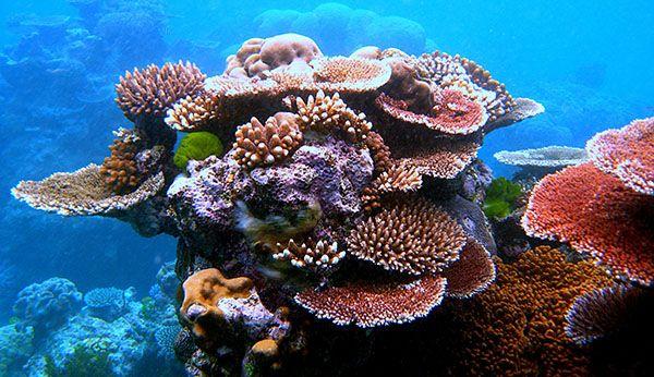 Coral multicolor
